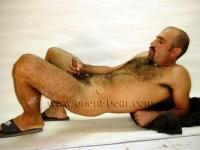 young turkish bear