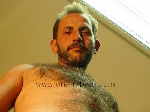 An horny naked very hairy turkish Truck Driver with Fur hairy Body and a bone hard Cock seen in a hot turkish Gay Video.